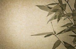 Documento di Brown e struttura del foglio del bambù Fotografia Stock