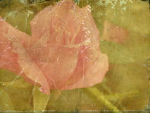 Documento e fiori royalty illustrazione gratis