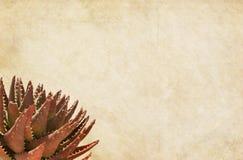 Documento marrone chiaro con la pianta succulente Immagini Stock