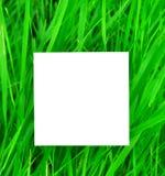 Documento sobre hierba verde Imagen de archivo libre de regalías