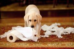 Documentos relevantes do cachorrinho foto de stock royalty free