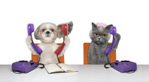 Dod och katten talar över telefonerna royaltyfri bild