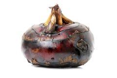 dodający kasztanów chiński dłoniaka często fertanie woda Obrazy Royalty Free