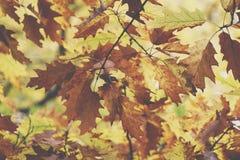 8 dodatkowego eps formata ilustratora dębowy drzewo Jesień Spadek scena Piękno natury sceny leav i drzewa Fotografia Stock