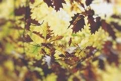8 dodatkowego eps formata ilustratora dębowy drzewo Jesień Spadek scena Piękno natury sceny leav i drzewa Obraz Stock