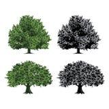 8 dodatkowego eps formata ilustratora dębowy drzewo ilustracja wektor