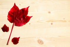 dodatkowej jesień karciany format Obrazy Stock