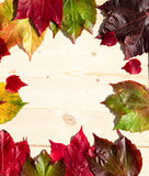 dodatkowej jesień karciany format Obraz Stock