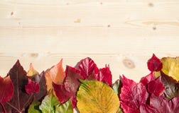 dodatkowej jesień karciany format Zdjęcia Royalty Free