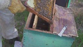 8 dodatkowy pszczół eps formata honeycomb ilustrator Miodowa żniwo pszczelarka delikatnie usuwa pszczoły od ramy pasieka makro- H zbiory wideo