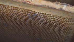 8 dodatkowy pszczół eps formata honeycomb ilustrator Miodowa żniwo pszczelarka delikatnie usuwa pszczoły od ramy pasieka makro- 4 zdjęcie wideo