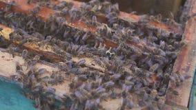 8 dodatkowy pszczół eps formata honeycomb ilustrator Pszczelarka delikatnie usuwa pszczoły od ramy pasieka makro- 4K zbiory