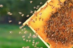 8 dodatkowy pszczół eps formata honeycomb ilustrator Zdjęcia Stock
