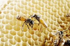 8 dodatkowy pszczół eps formata honeycomb ilustrator Zdjęcia Royalty Free