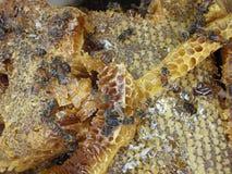 8 dodatkowy pszczół eps formata honeycomb ilustrator Obrazy Royalty Free