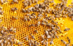 8 dodatkowy pszczół eps formata honeycomb ilustrator Obraz Stock