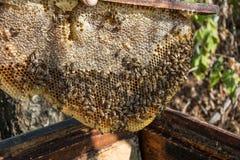 8 dodatkowy pszczół eps formata honeycomb ilustrator Zdjęcie Stock