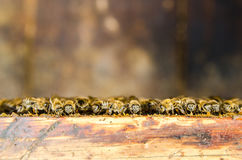 8 dodatkowy pszczół eps formata honeycomb ilustrator Obraz Royalty Free