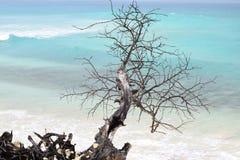 Dode bevindende boom bij de zeekust met ruwe golven op de oceaan in de rug stock afbeelding