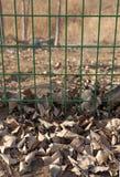 Dode Bladeren Royalty-vrije Stock Afbeelding