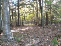 Dode bladeren in een bebost bos royalty-vrije stock foto