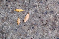 Dode bladeren gevallen op de vloer in een cementweg Stock Afbeeldingen