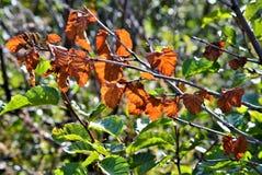 Dode bladeren op een lidmaat royalty-vrije stock foto