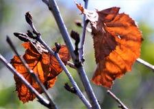 Dode bladeren op een lidmaat royalty-vrije stock afbeelding