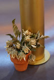 Dode bloem, selectieve nadruk Royalty-vrije Stock Fotografie
