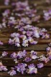 Dode bloemen op een veranda stock afbeelding