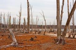 Dode Bomen Stock Afbeeldingen