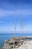 Dode Bomen Stock Afbeelding