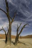 Dode Bomen Stock Fotografie
