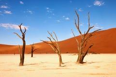 Dode bomen bij deadvlei Royalty-vrije Stock Foto's