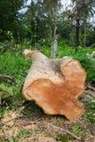 Dode Bomen Bomen die worden gesneden Stock Foto