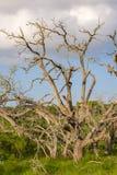 Dode bomen in de voorgrondwolken erachter Stock Afbeelding
