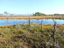 Dode bomen dichtbij meer in moeras Stock Afbeelding