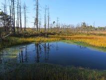 Dode bomen dichtbij meer in moeras Stock Foto