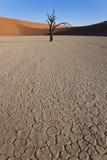 Dode bomen, Dode Vlei, Namibië Royalty-vrije Stock Afbeelding