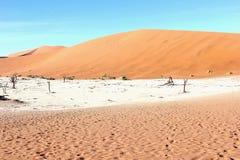Dode bomen Dode Vlei, Namibië Royalty-vrije Stock Afbeeldingen