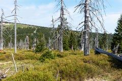 Dode bomen - Effect van milieuvervuiling Stock Fotografie