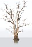Dode bomen en droog. royalty-vrije stock fotografie