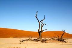 Dode bomen en duinen in woestijn Stock Foto's