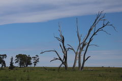 Dode Bomen en Hun Gebruik Stock Afbeelding