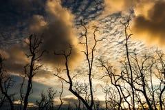 Dode bomen en modderig strand bij zonsondergang Royalty-vrije Stock Foto