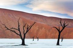 Dode bomen en rode duinen in Dode Vlei, Sossusvlei Royalty-vrije Stock Fotografie