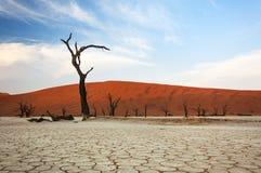 Dode bomen en rode duinen in Dode Vlei, Sossusvlei Stock Afbeelding