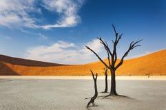 Dode bomen en rode duinen in Dode Vlei, Sossusvlei, Namibië Stock Foto's