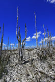 Dode bomen, het globale verwarmen Royalty-vrije Stock Foto's