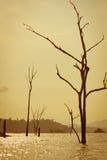 Dode bomen in het meer Royalty-vrije Stock Afbeeldingen